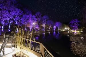 춘천 제이드가든 수목원, 6월 2~6일 야간 개장